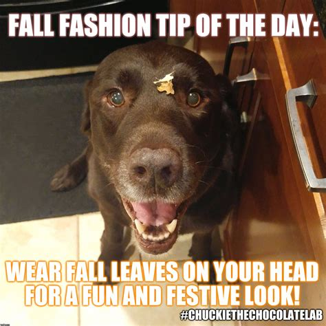 Fall Meme - fall fashion tip of the day imgflip