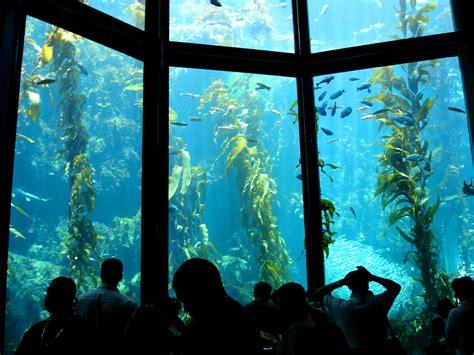the monterey bay aquarium monterey bay aquarium