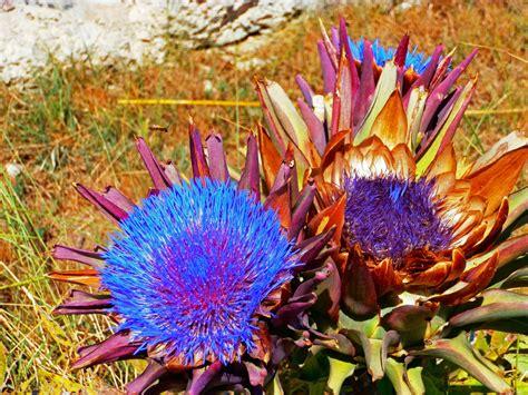 fiori botanica immagini natura fiore frutteto