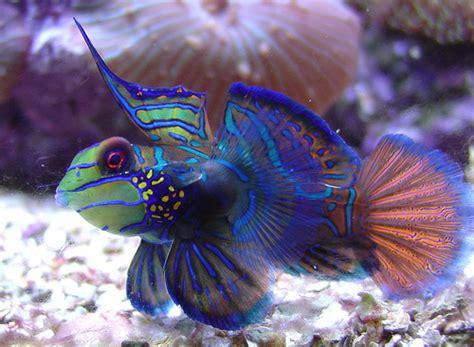 le plus beau poisson d aquarium