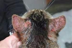 Flöhe Bei Katzen Bekämpfen : parasiten hausmittel ~ Orissabook.com Haus und Dekorationen