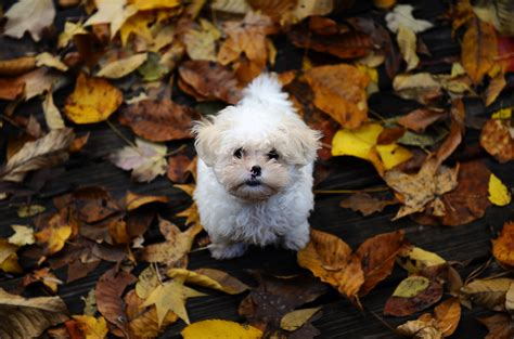 dog wallpapers high quality