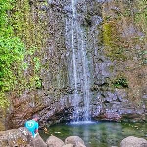 Popular Waterfall Hikes On Oahu Manoa Falls Waimea