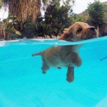 eeeeeeeeeee cute dog friends cute animals dogs