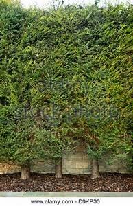 Leyland Zypresse Kaufen : leyland zypressen hecke cupressocyparis leylandii vor kurzem schneiden aber anzeichen von ~ Frokenaadalensverden.com Haus und Dekorationen