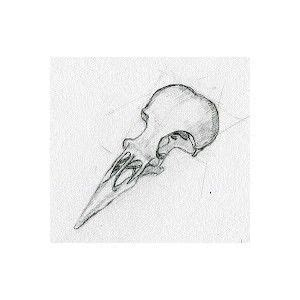 Bird Skull Drawings Sweet Nature Drawing