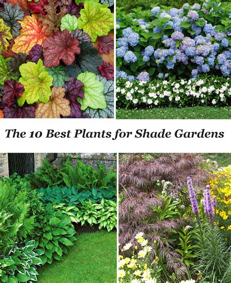 plants for a shady area 10 best shade garden plants