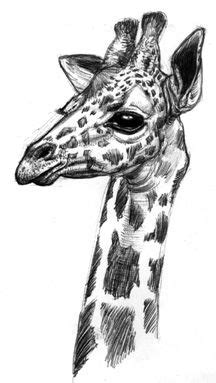 Giraffe and Baby Pencil Drawing   Michelle's Drawings   Pinterest   Giraffe, Drawings and Tattoo