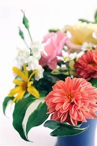Bilder Blumen Kostenlos Downloaden : blumenstrau vase kostenlose bilder download titania foto ~ Frokenaadalensverden.com Haus und Dekorationen