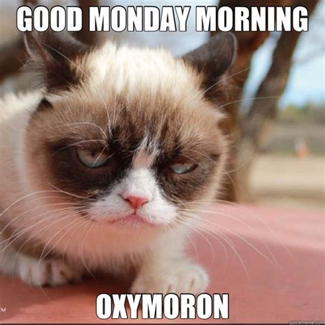 #grumpycat #meme For More Grumpy Cat Stuff, Gifts, And