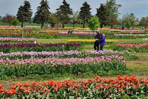 Veldheer Tulip Garden by Veldheer Tulip Gardens In Michigan