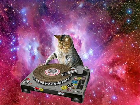 space cats caterville cats in space