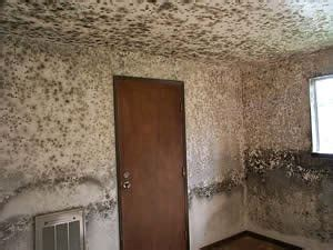 mold  mildew paintpro magazine