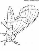 Moth Coloring Pages Lightupyourbrain Butterfly Insects Colouring Print Snakes Totoro Pixels Bug sketch template