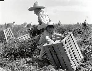 A man and young child harvesting carrots in the Imperial ...