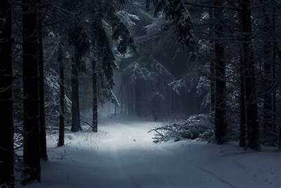 Forest Winter Dark