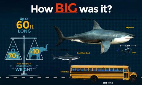 Megalodon Images Megalodon Size How Big Was The Megalodon Shark