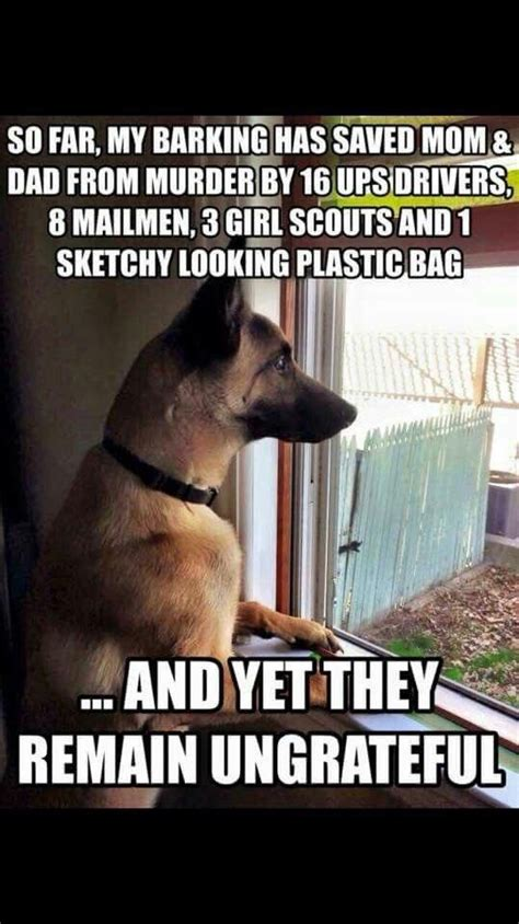 Asian Dog Meme - best 25 squirrel humor ideas on pinterest what does squirrel eat good humor and german malinois