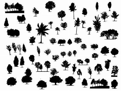 Shapes Trees Vector Different Illustrator Types Adobe