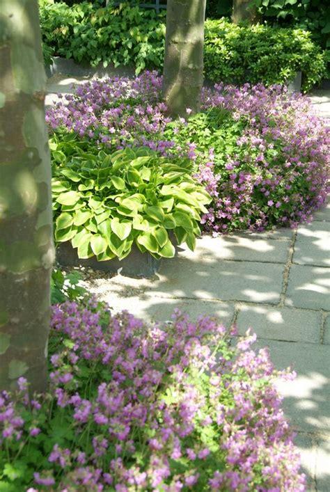 Pflanzen Für Schatten Im Garten by Beet Im Schatten Garten Vorgarten Gestalten Garten