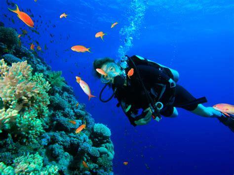 arrecifes de coral en mexico  bucear  hacer snorkel