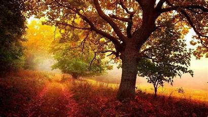 Nature Wallpapers Autumn
