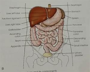 Abdomen Procedures