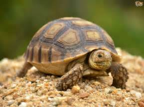 Tortoise Turtle Shells
