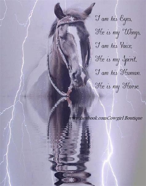 horse quotes eyes each riding he riders depend into horses trailer spirit reflection