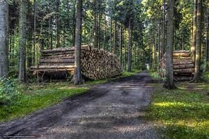 Bois De Chauffage Gratuit : tlcharger fond d 39 ecran for t arbres route bois de ~ Melissatoandfro.com Idées de Décoration