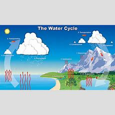 Water Cycle  Water Cycle Song  The Water Cycle For Kids  The Water Cycle For Children Youtube