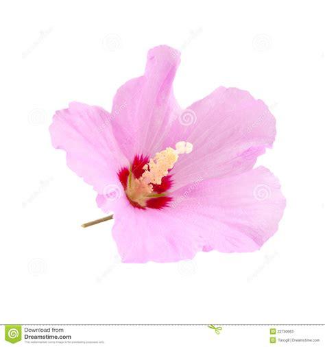 Purple Hibiscus Quotes