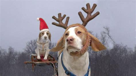 Cute Puppy Dog Christmas