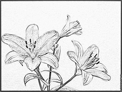 dessins de coloriage fleur de lys  imprimer