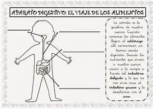 Fichas Conocimiento Del Medio Cuarto Primaria El Cos Huma Pinterest ...