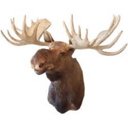 Deer Antler Home Decor Image