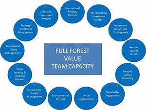 Forestry Services | Woodland Management