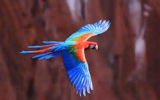 Colorful Birds Flying Parrot