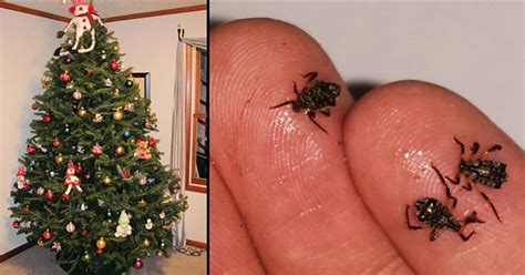 black bugs on christmas tree your living tree is most likely crawling with bugs
