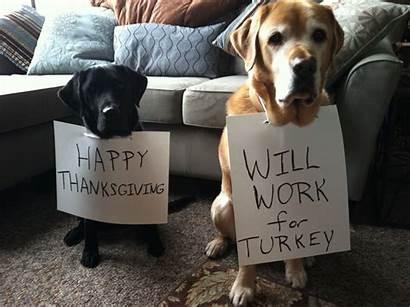 Thanksgiving Happy Dogs Dog Eat Turkey Pets