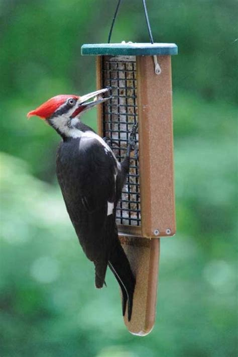 pileated woodpecker feeder prop suet feeder plans woodworking projects plans