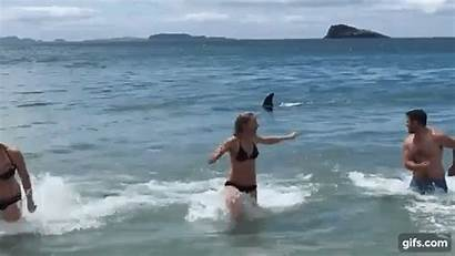 Whale Swimmers Killer Curious Delighted Flee Boingboing