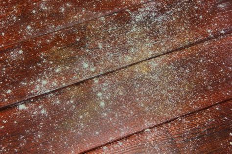 removing mold  wood furniture hunker