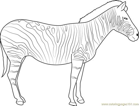 zebra coloring page  zebra coloring pages