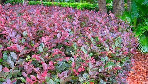 garden design 40554 garden inspiration ideas