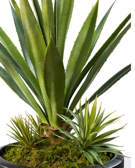 tabletop perfection agave americana artificial succulent