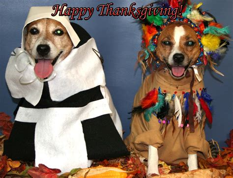 Thanksgiving Animal Wallpaper - happy thanksgiving 2013 destiny for dogs not for profit