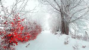 HD Winter Wallpapers 29 – HdCoolWallpapers.Com