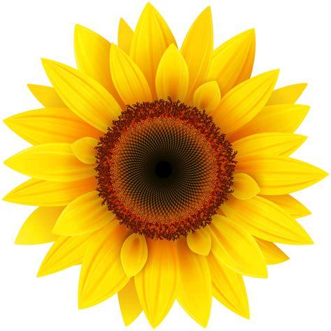 sunflower png image purepng  transparent cc png