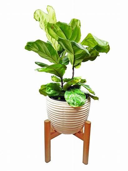 Plant Stand Planter Indoor Wooden Century Mid